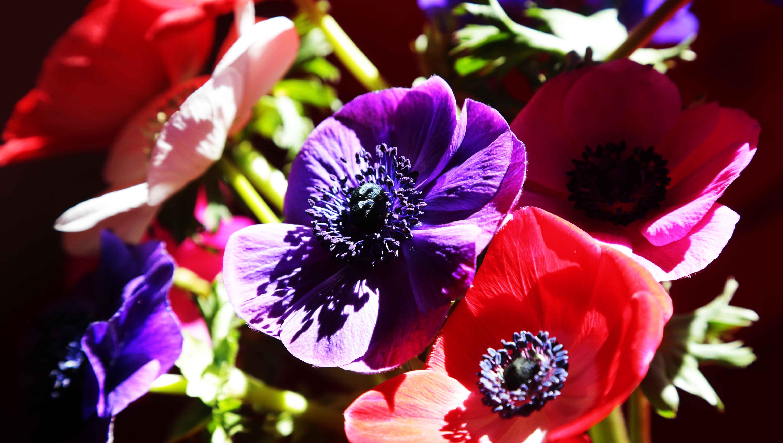 Primavera a Vallcarca Sant Gervasi